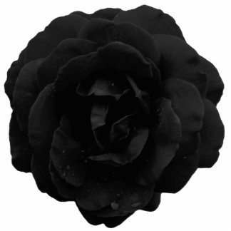 Jewelry - Pin - Black Gothic Rose Photo Sculpture Badge