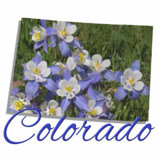 Jewelry - Pin - COLORADO Photo Sculpture Badge
