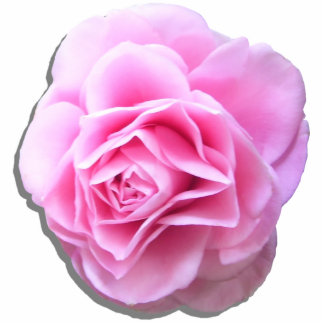 Jewelry - Pink - Rose Pink Camellia Photo Sculpture Badge