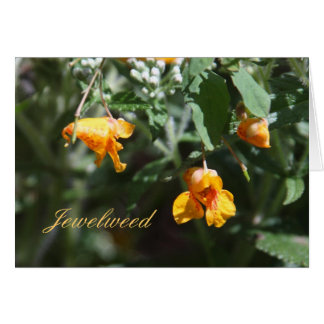 Jewelweed Card