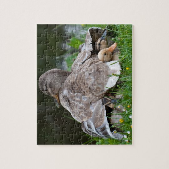 Jigsaw Puzzle: Mallard duck and ducklings Jigsaw Puzzle