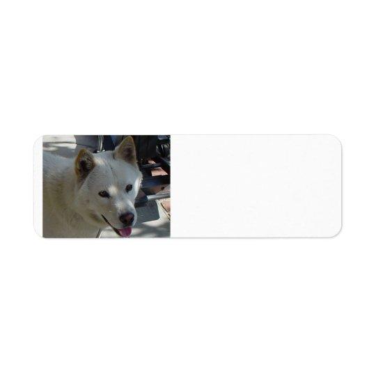 jindo.png return address label