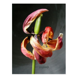 jjhelene Artisitc Dancing Tulip Postcard