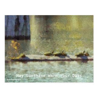 John's Turtle Raft Postcard