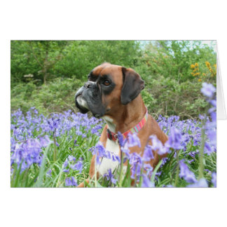 Jolie in the bluebells card
