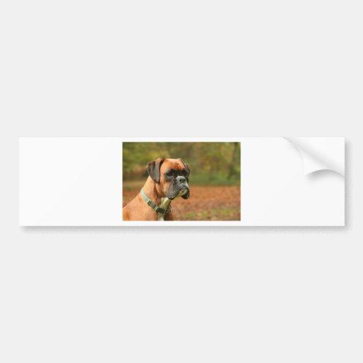 Jolie in the woods bumper sticker
