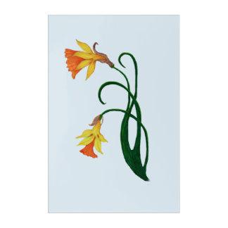 Jonquil, Daffodil, Narcissus Acrylic Print