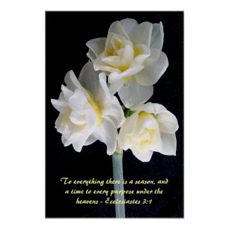 Jonquil Flower - Ecclesiastes 3:1 Poster