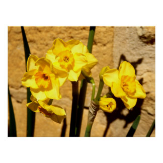 Jonquil Flowers Poster
