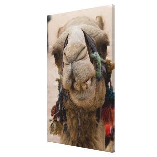 Jordan, Ancient Nabataean city of Petra. Local Stretched Canvas Prints