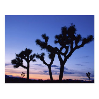 Joshua Tree National Park at sunset , California Postcard