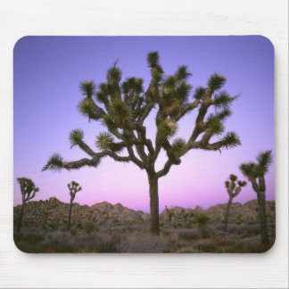 JOSHUA TREE NATIONAL PARK, CALIFORNIA. USA. MOUSE PAD