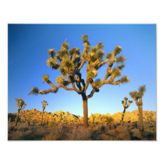 Joshua Tree National Park, California. USA. Photo Print