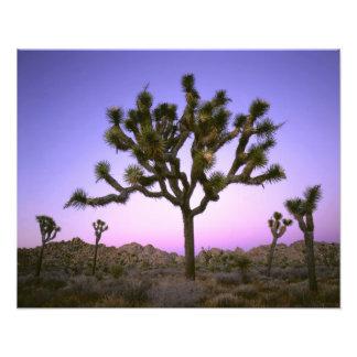 JOSHUA TREE NATIONAL PARK, CALIFORNIA. USA. PHOTO ART