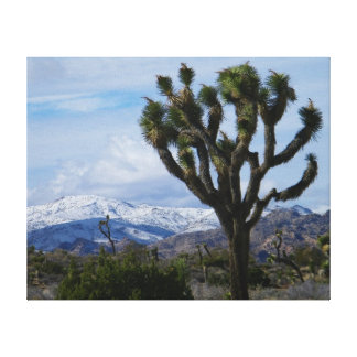 Joshua Tree National Park Gallery Wrapped Canvas