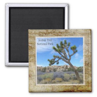 Joshua Tree National Park Magnet! Square Magnet
