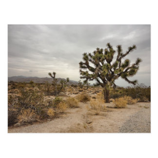 Joshua Tree National Park Post Cards