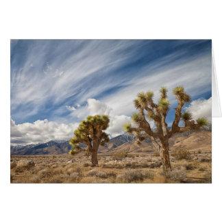 Joshua Trees in Desert Card