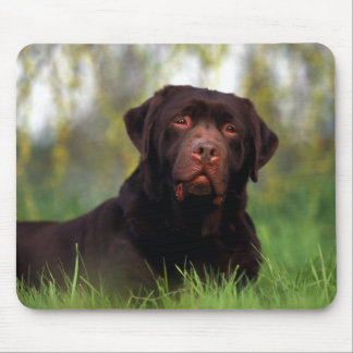Jowls Mouse Pad