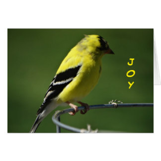 Joy, Goldfinch Card