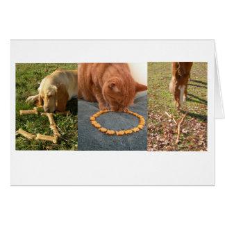 JOY pets Card