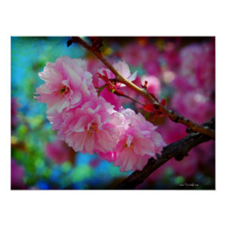 Joys of Summer - pink cherry blossoms Poster