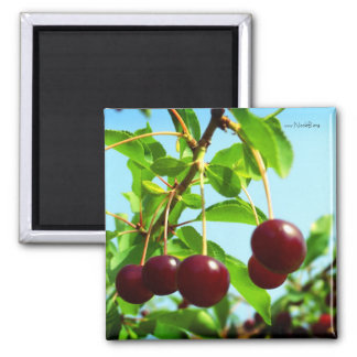 Joys of summer - red cherries square magnet