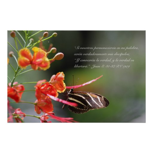 Juan 8 con mariposa Zebra Longwing Posters
