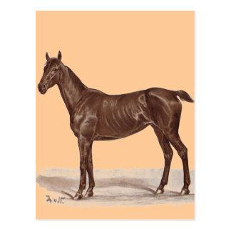 "Jucker ""Sütveny"" Horse by Thomas von Nathusius Postcard"