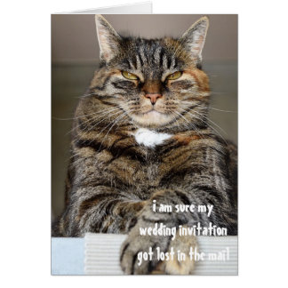 Judgmental Angry Cat Lost Wedding Invitation Humor