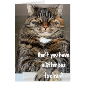 Judgmental Cat Angry Clean Litter Box Funny Humor Card