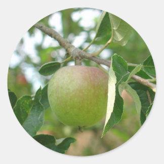 Juicy Green Apple Classic Round Sticker