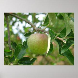 Juicy Green Apple Poster