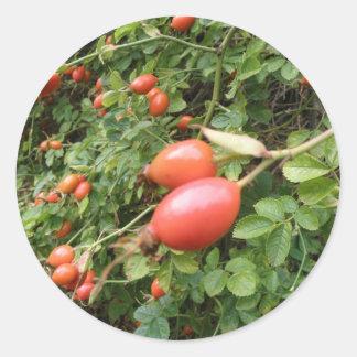 Juicy Red Rose Hips Sticker