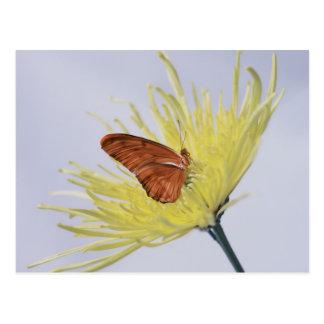 Julia Butterfly Postcard