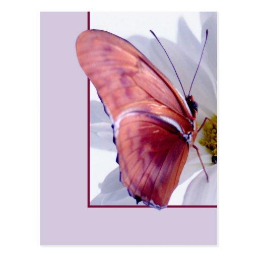 Julia Butterfly Post Card