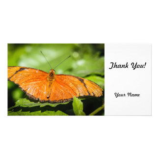 Julia Heliconian Dryas Julia Picture Card