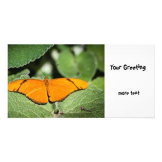 Julia Heliconian Dryas Julia Photo Card Template