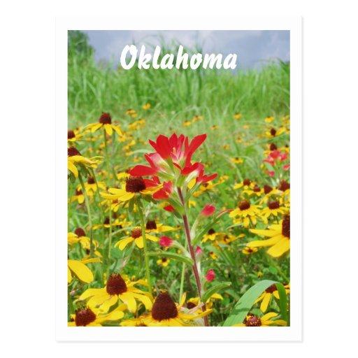 july2007 indian paintbursh, Oklahoma Post Card