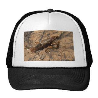 Jumbo Alabama Crawdaddy Critters Cap