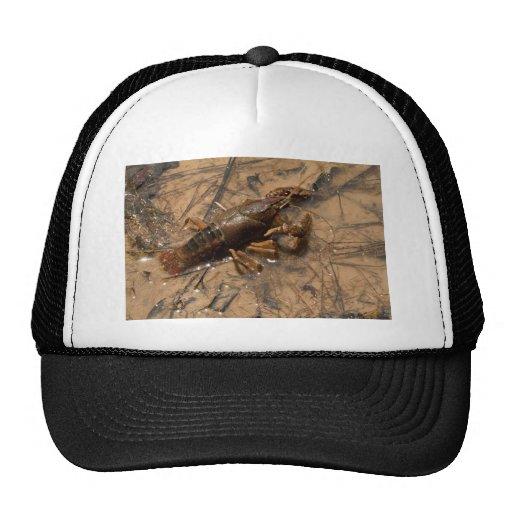 Jumbo Alabama Crawdaddy Critters Hat