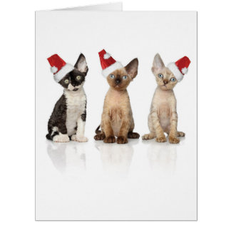 Jumbo Santa Cats Christmas Card