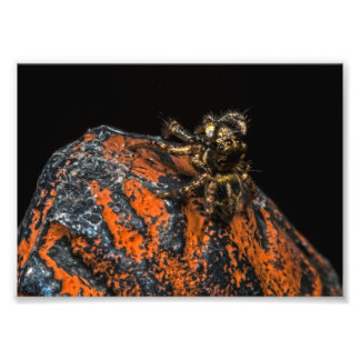 Jumping Spider Looking Up At The Sky Photographic Print