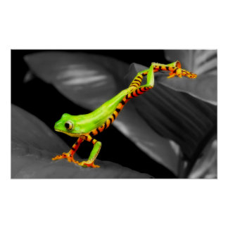 Jumping Tree Frog Poster