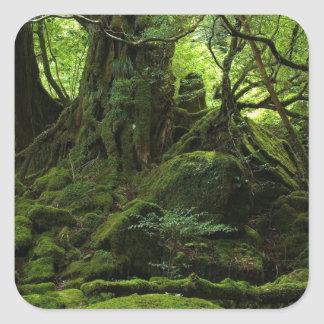 Jungle Forest of Moss Square Sticker