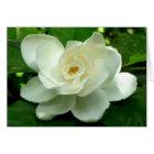 Jungle Gardenia Card