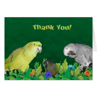 Jungle Parrot thank you note cards