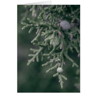 Juniper Berries Greeting Cards
