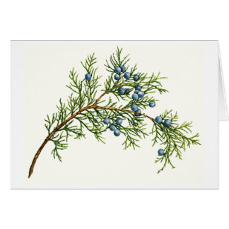 Juniper Branch Card