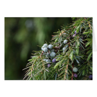 Juniperus berries on a tree card